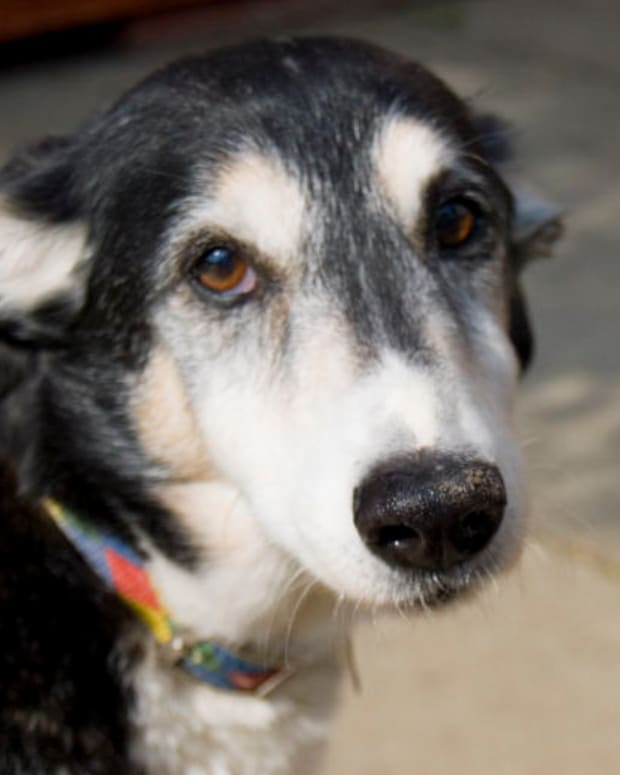 why-is-my-elderly-dog-suffering-from-sudden-separation-anxiety