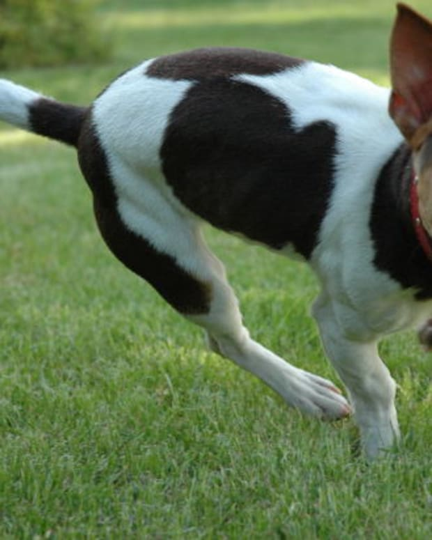 how-to-help-a-dog-terrified-of-insects