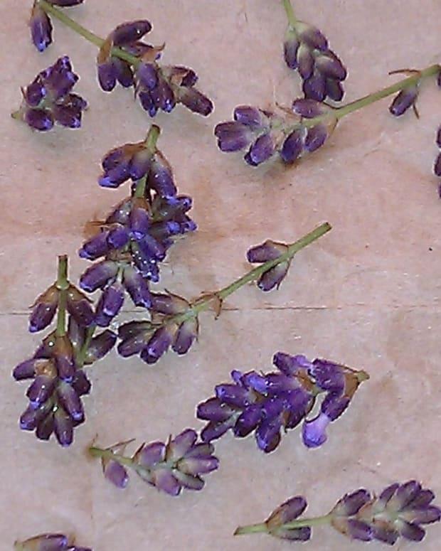 how-to-prepare-lavender-tea