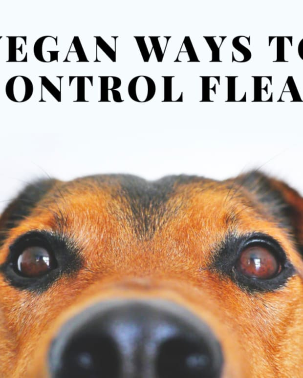 nontoxic-natural-flea-control