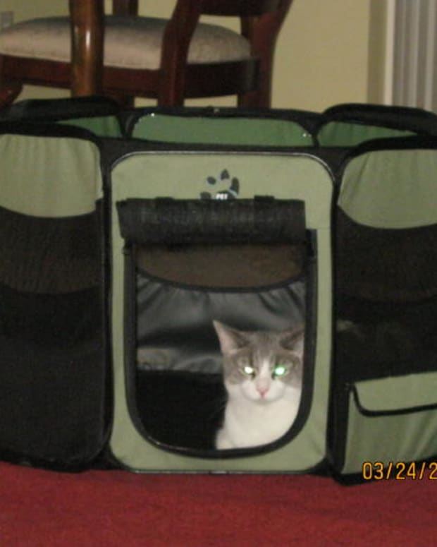 a-great-way-to-travel-and-move-across-country-with-cats