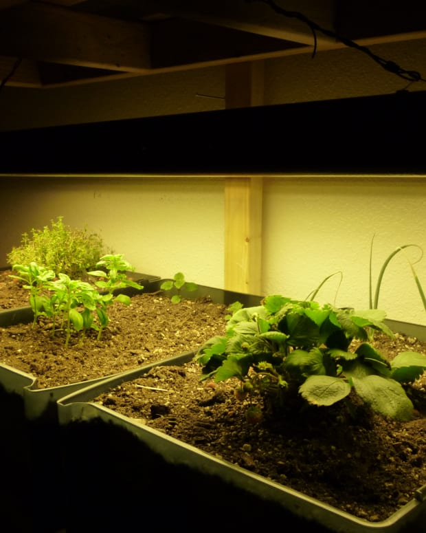 what-is-indoor-gardening