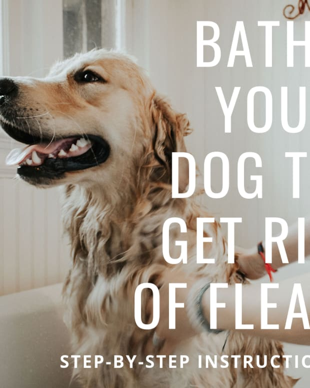 how-to-rid-your-dog-of-fleas-fast