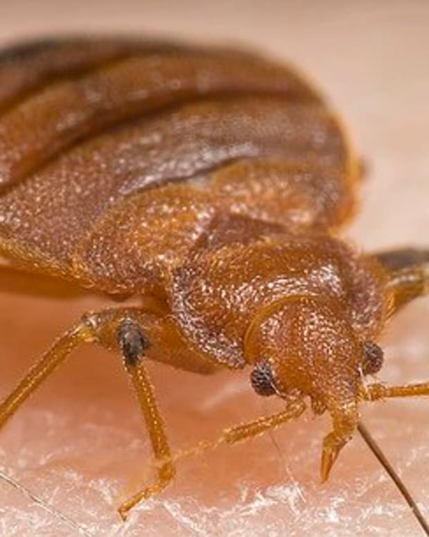 how-to-check-for-bed-bugs