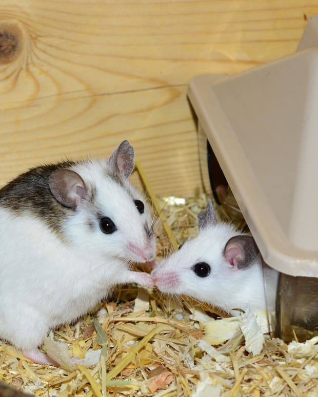 introducemice