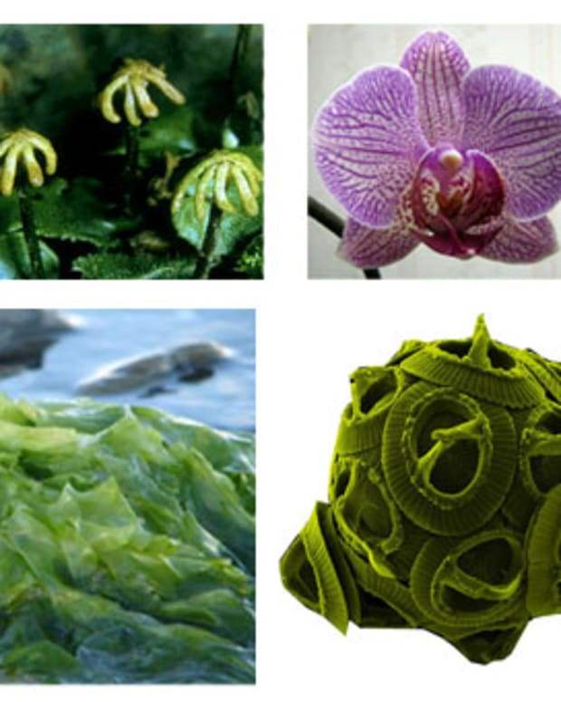 types-of-plants-with-pictures