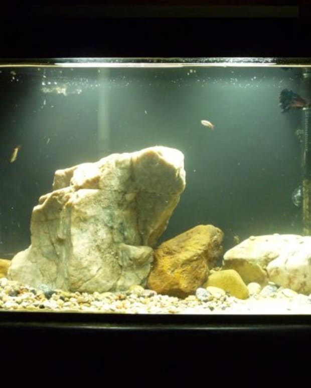 rocks-in-aquariums
