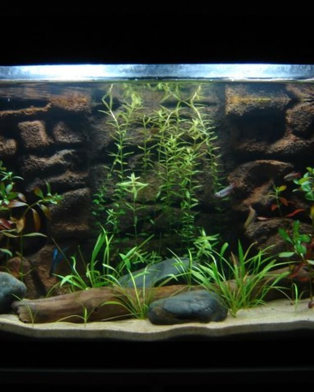 live-plants-in-aquariums-a-fish-guide
