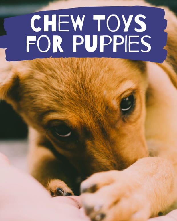 the-best-chew-toys-for-a-teething-puppy