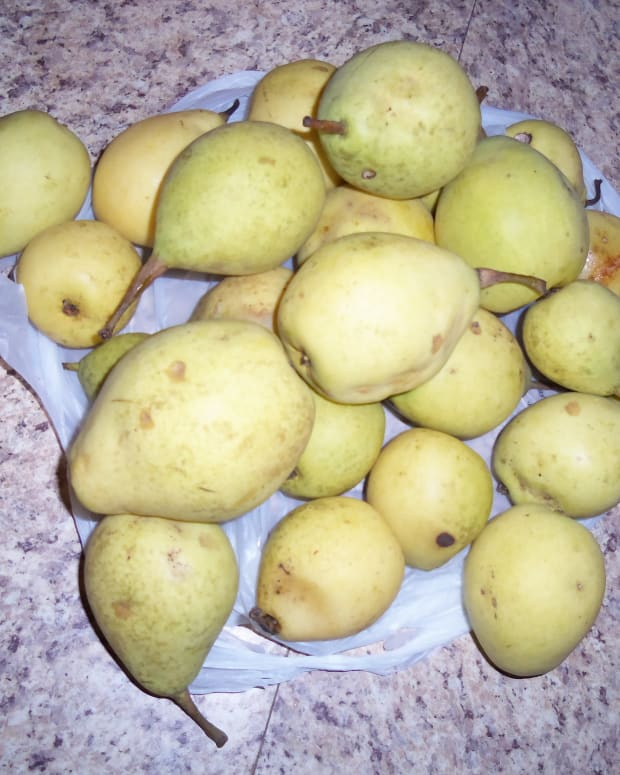 easy-homemade-pear-wine-recipe