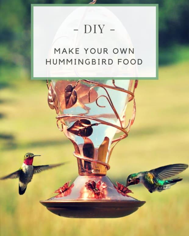 how-to-make-hummingbird-food-nectar