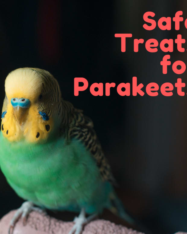which-foods-are-safe-for-parakeets