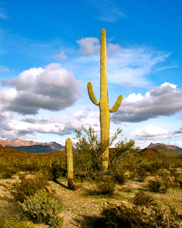 cactus-on-the-desert-landscape