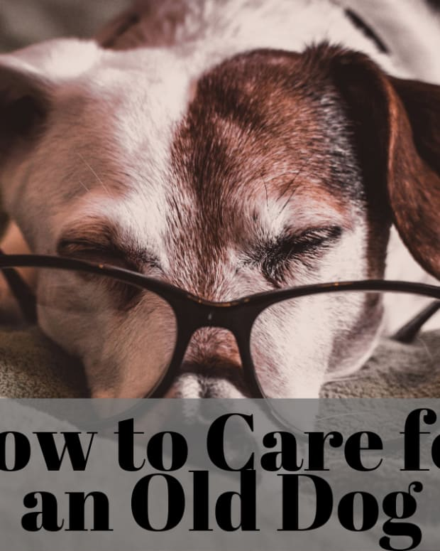 caring-for-an-aging-dog-tricks-your-old-dog-needs-you-to-learn