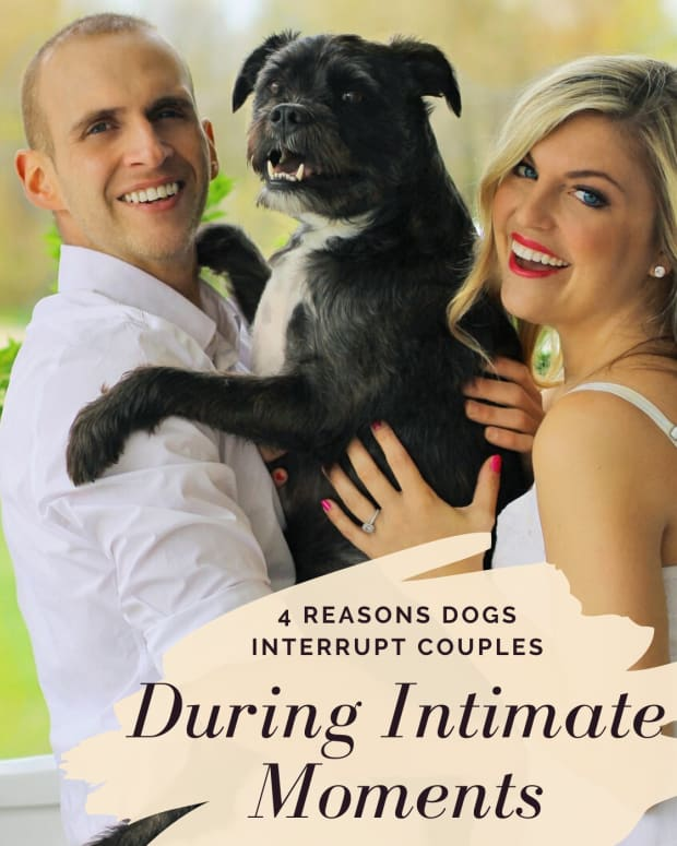 why-are-some-dogs-protective-when-owners-are-making-out