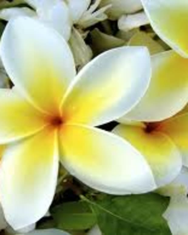 the-best-flowers-in-hawaii