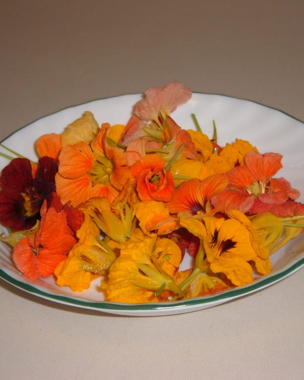 how-to-make-nasturtium-jelly
