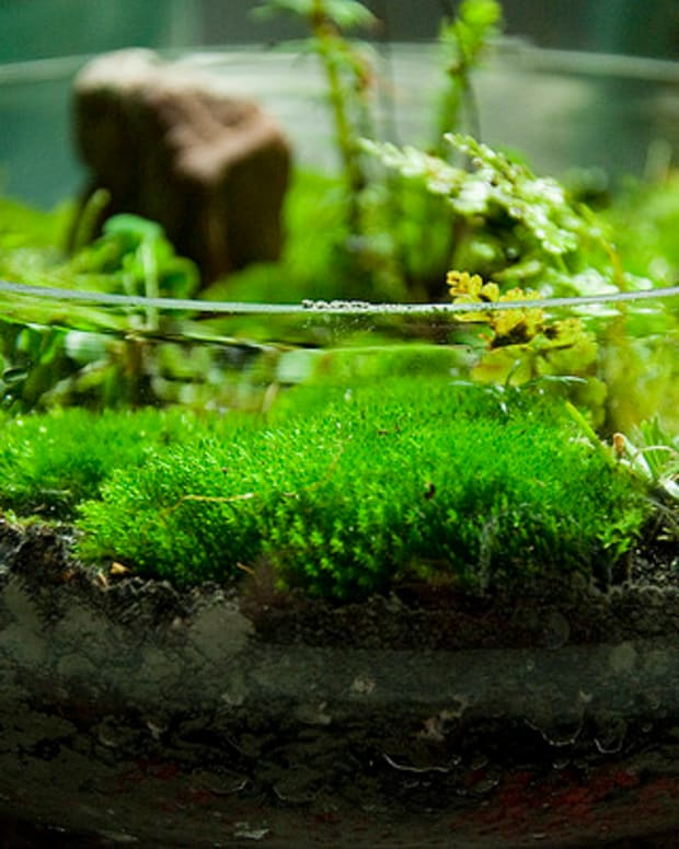 how-to-grow-moss-and-start-a-moss-garden