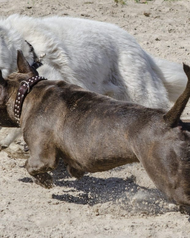 how-to-stop-a-dog-from-excitedly-lunging-towards-other-dogs