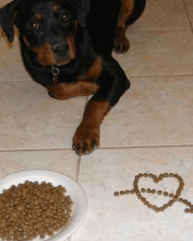 homemade-recipes-for-dogs-with-sensitive-stomachs