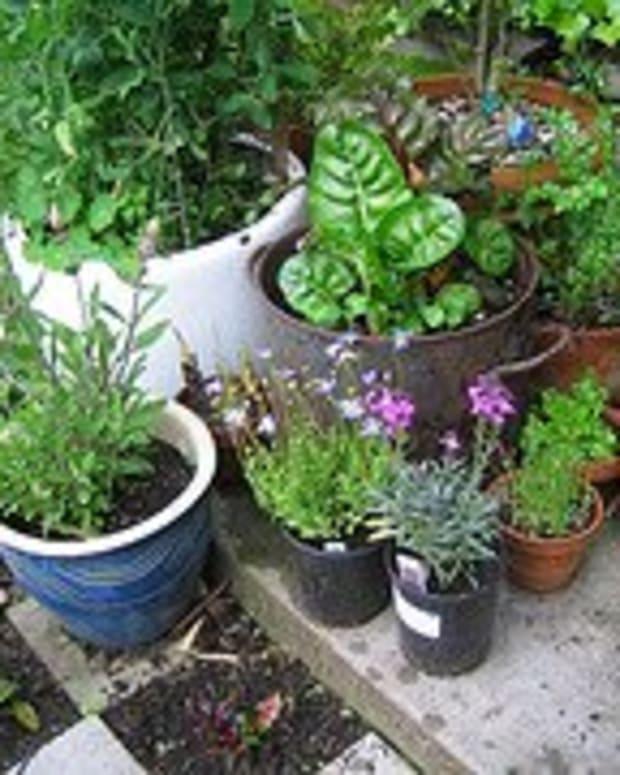 natural-garden-pest-control