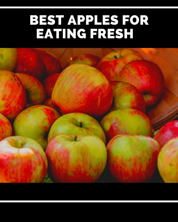 which-apples-are-best-for-fresh-eating