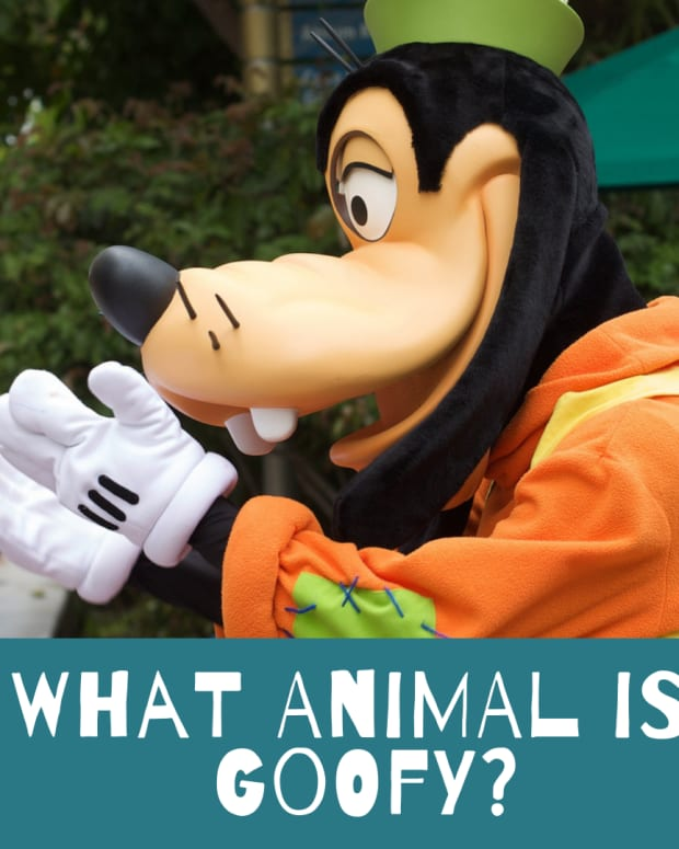 is-goofy-a-dog