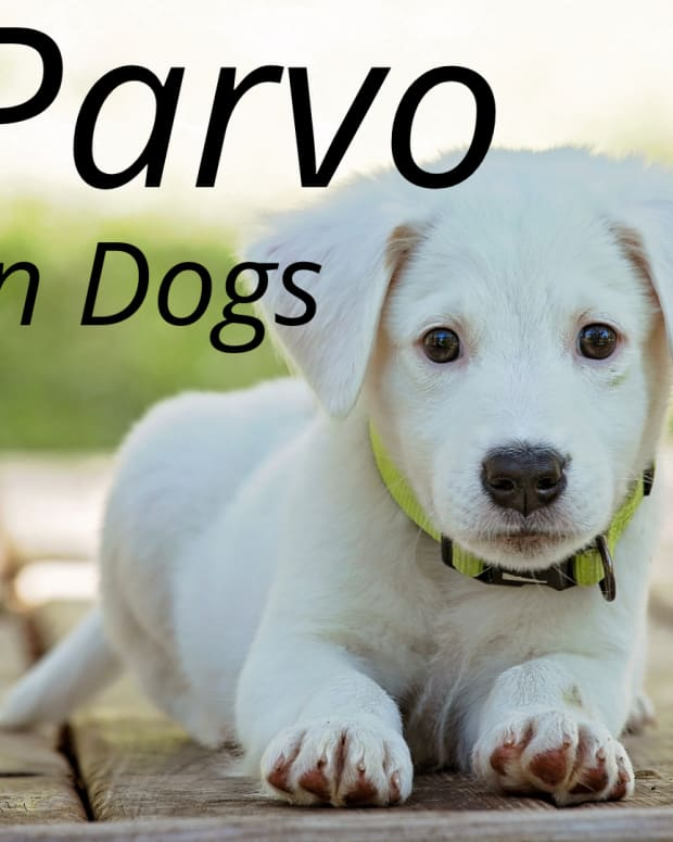 canineparvovirusmisconceptions