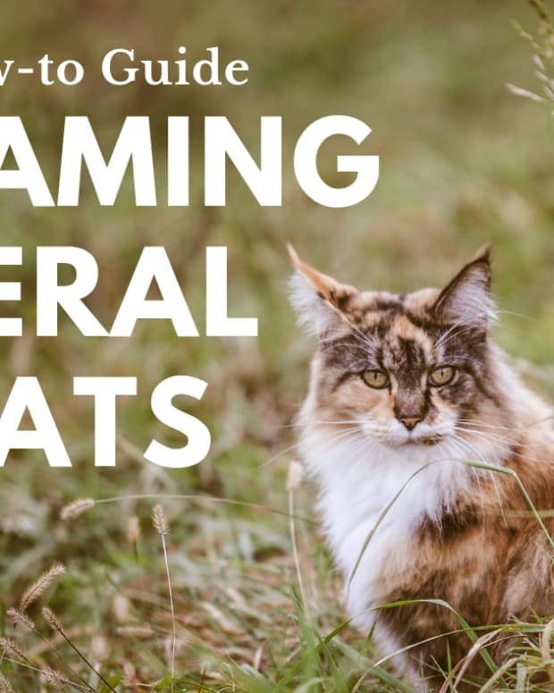 how-to-tame-a-wild-cat