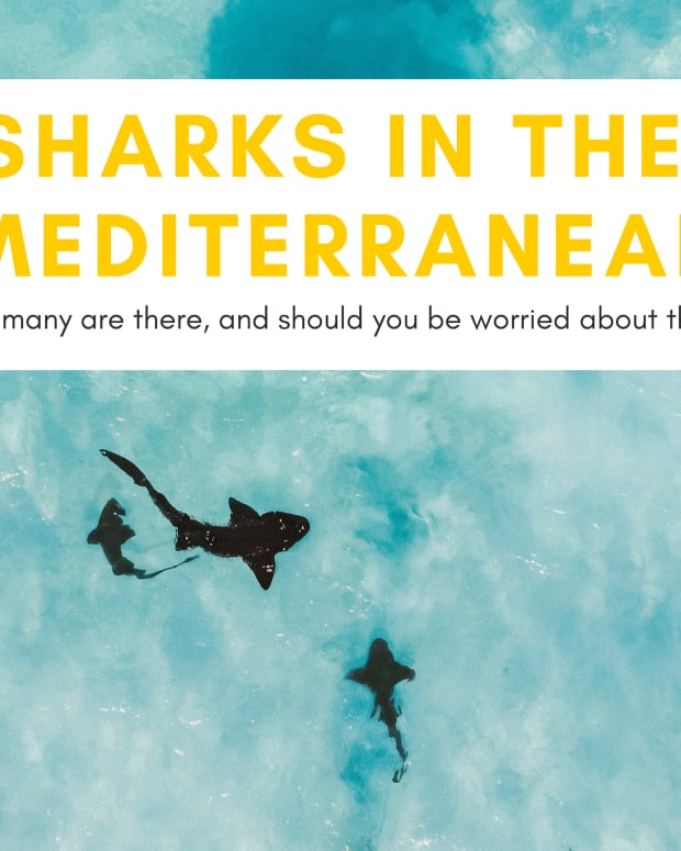 sharks-in-the-mediterranean-sea