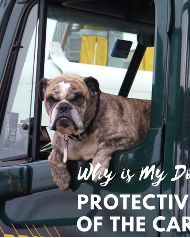 dog-behavior-how-to-stop-a-dog-from-acting-protective-of-the-car