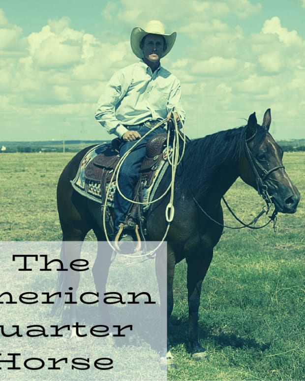 why-american-quarter-horses-make-great-pets-expert-advice-from-an-aqh-owner-trainer-and-vet