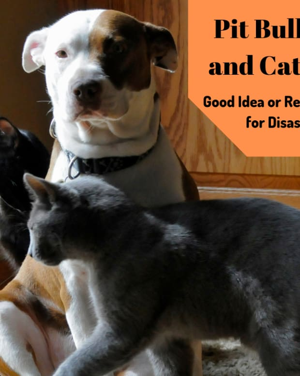pit-bulls-and-cats