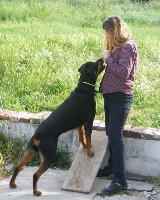 dog-training-understanding-poisoned-cues