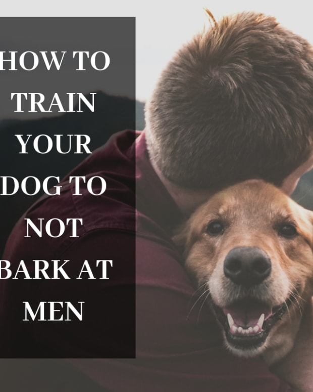 dog-behavior-how-to-stop-a-dog-from-barking-at-men-guests
