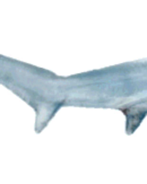 what-kind-of-sharks-live-in-british-waters