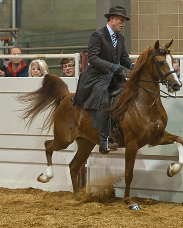 interesting-facts-about-arabian-horses