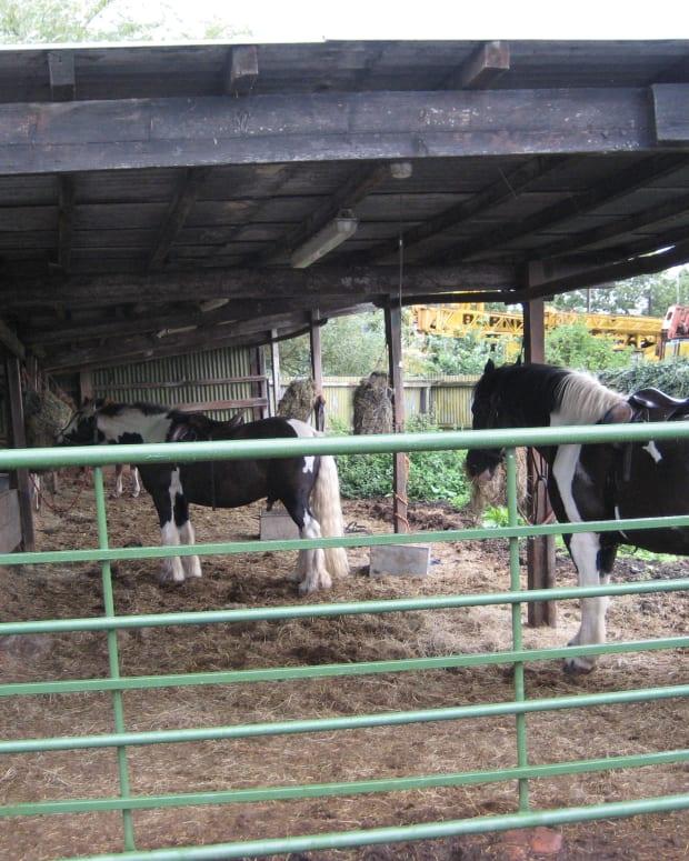 horsetrainingtoolsmartingales