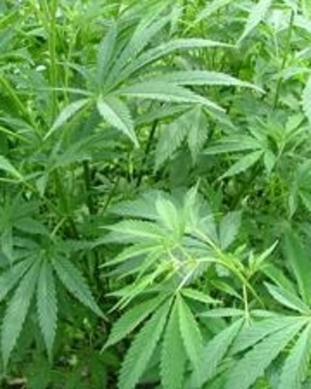 development-of-the-marijuana-breathalyzer-a-speedbump-in-legalization