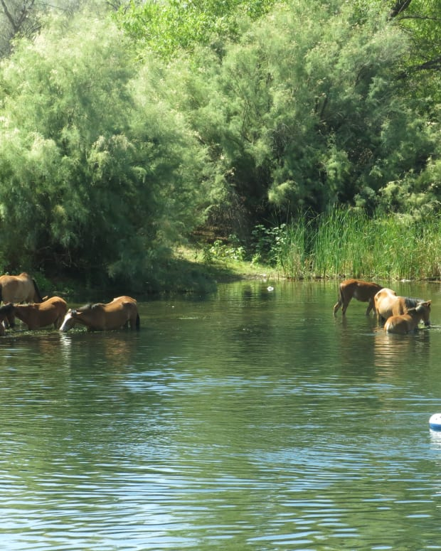 IMG_6985 - Sep 11 2016, Wild Horses, Salt River