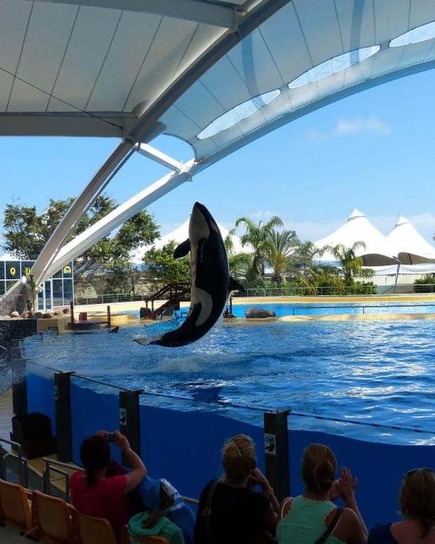 psychological-effects-on-the-orca-caused-by-captivity