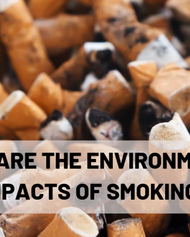 smoking-beyond-you-the-environmental-impact-of-cigarettes