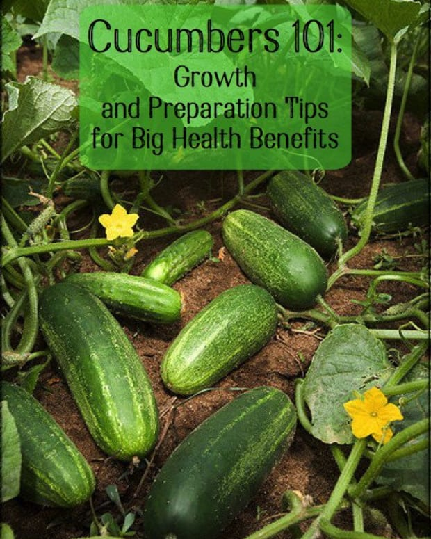 gardening-101-how-to-grow-cucumbers-how-to-process-cucumbers-and-medicinal-properties-of-cucumbers