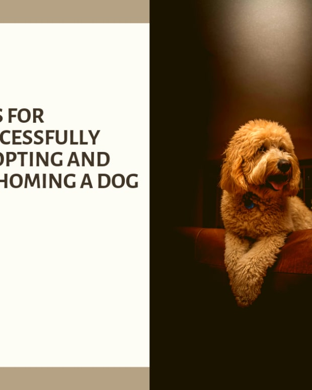 8-ways-of-increasing-your-chance-of-successfully-adopting-a-dog