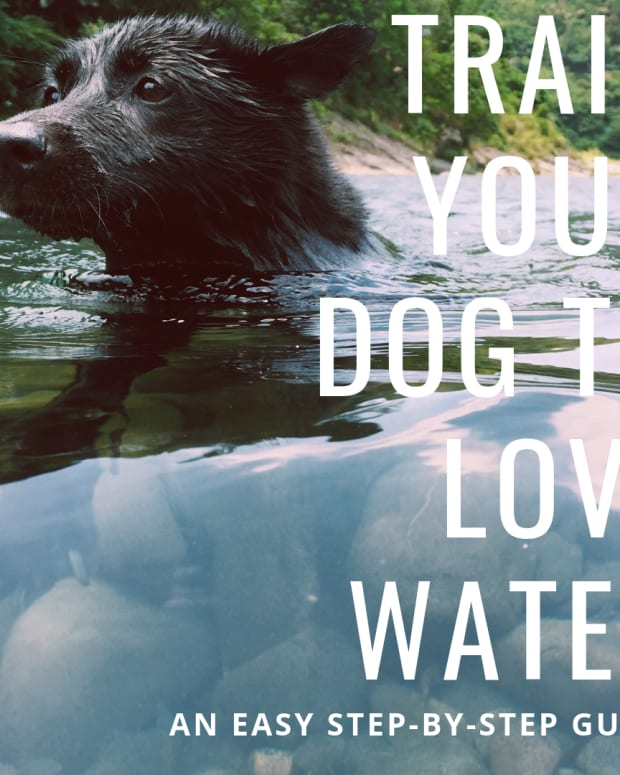 how-to-bathe-a-big-dog-afraid-of-water