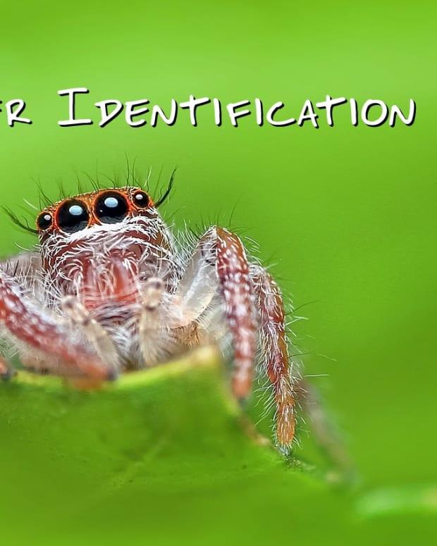 spider-identification