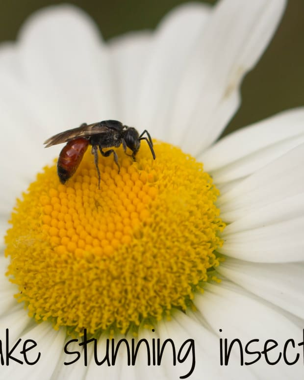 insect-photography