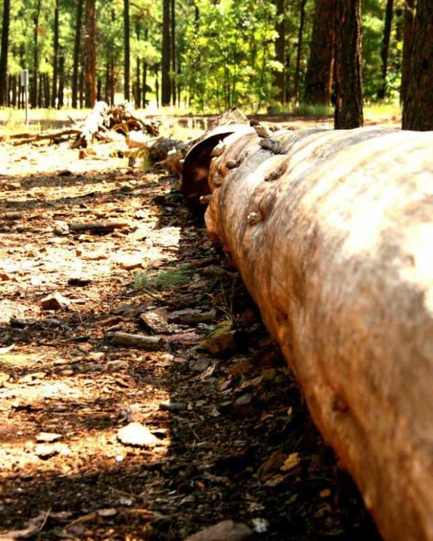 sustainable-forest-management-selective-cutting-vs-clear-cutting