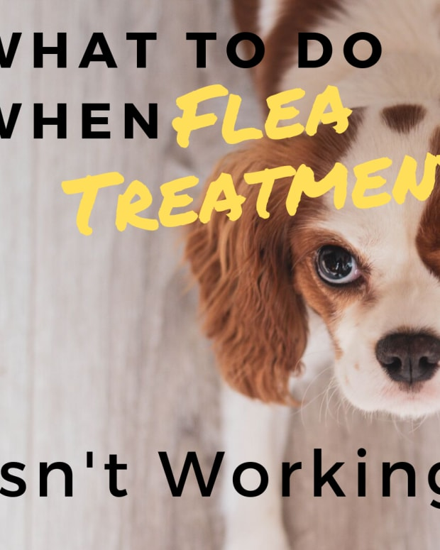 why-is-dog-flea-treatment-not-working