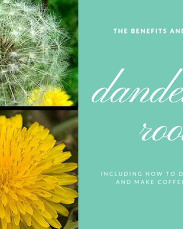 health-benefits-of-dandelion-root